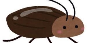 ゴキブリ〜